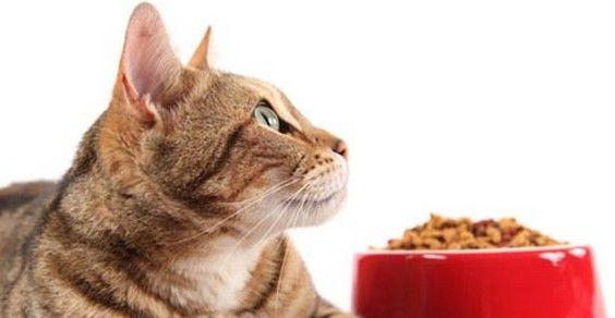gatto alimentazione
